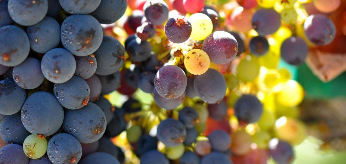 Long Island Adventures - Long Island Wine Tours
