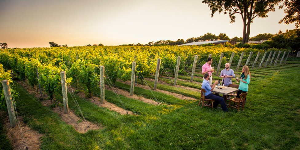 Long Island Wine Tours Vineyard
